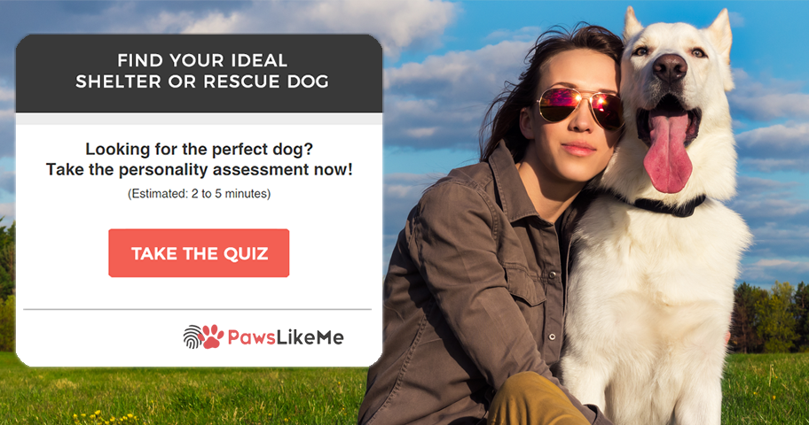 Find your ideal Pet Match! Adopt the RIGHT dog or cat today